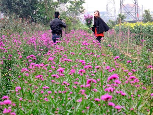 Vé máy bay đi Hải Phòng - Ghé thăm các làng trồng hoa truyền thống