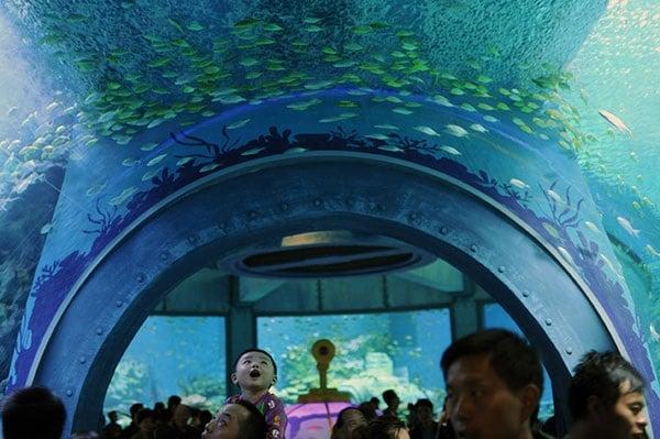Vé máy bay đi Nha Trang - Viện Hải dương học Nha Trang