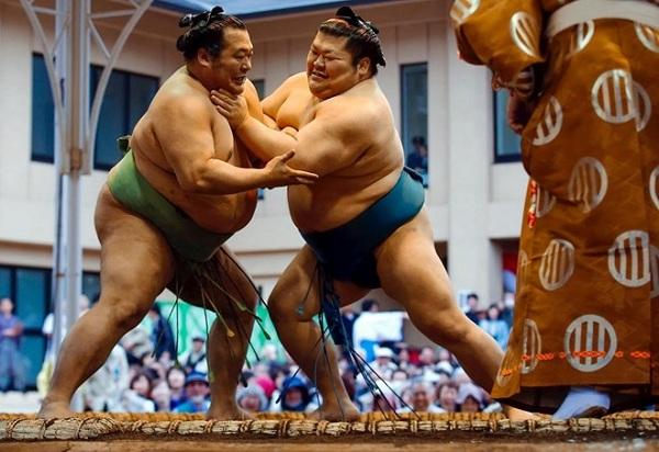 Xem đấu Sumo