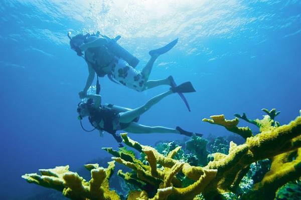 lặn biển ở đảo Apo