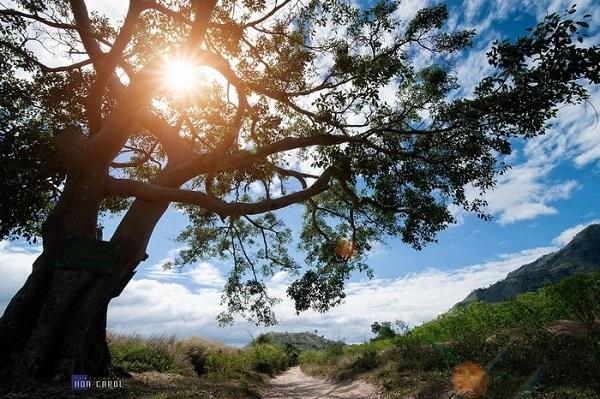 Pleiku – điểm dừng chân hấp dẫn tại Tây Nguyên