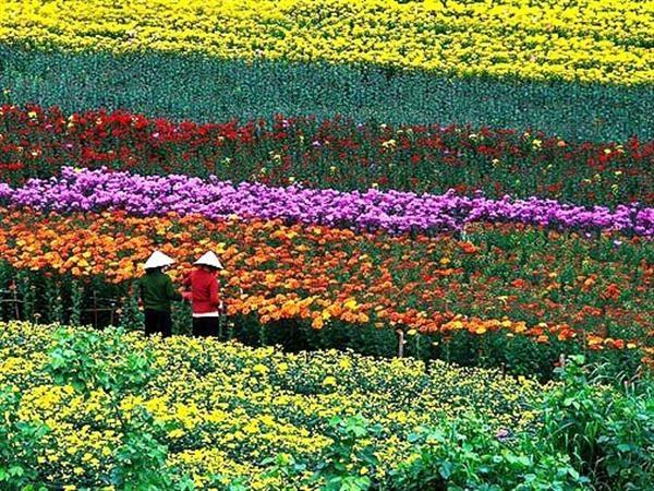 Cùng vé máy bay đi Đà Lạt chiêm ngưỡng làng hoa nổi tiếng và lâu đời nhất