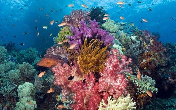 Vé máy bay đi Côn Đảo - Lặn biển ngắm san hô rực rỡ màu sắc