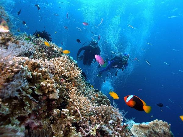 Vé máy bay đi Côn Đảo - Trải nghiệm lặn biển ở Côn Đảo