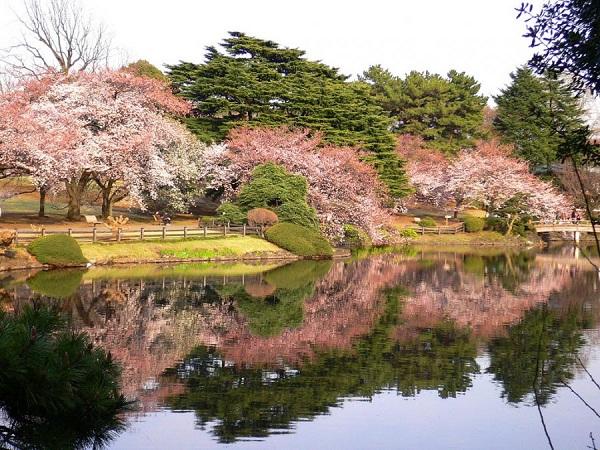 Công viên quốc gia Shinjuku Gyoen, Nhật Bản