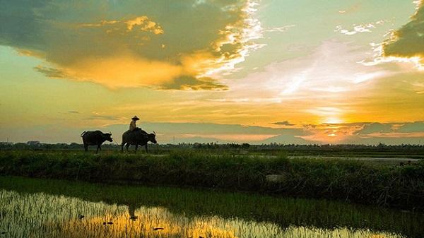 Vẻ đẹp bình yên đất nước con người Việt