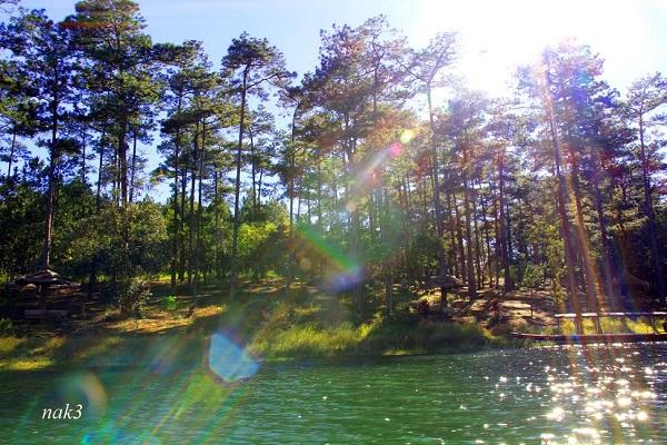 Vé máy bay đi Đà Lạt - Vẻ đẹp của rừng lá phong