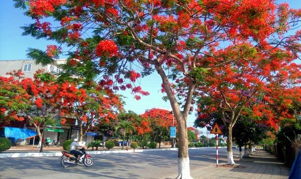 Vé máy bay đi Hải Phòng - Vẻ đẹp thành phố Hoa Phượng Đỏ