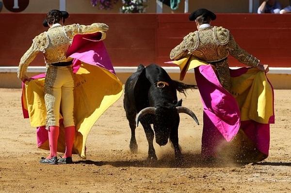 Đấu bò Tây Ban Nha