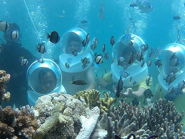 Vé máy bay Nha Trang - Trải nghiệm đi dạo ngắm cá, san hô dưới đấy biển