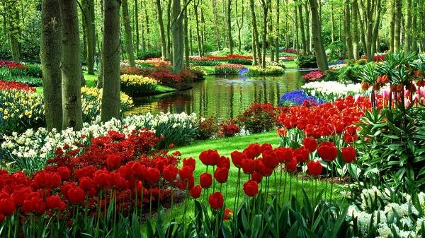 Bạn có thể ghé thăm Hà Lan vào những dịp đặc biệt nào?