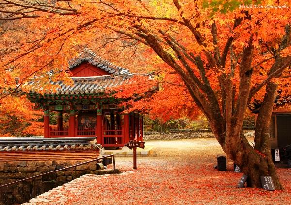 Cẩm nang về thời gian du lịch Seoul, Hàn Quốc