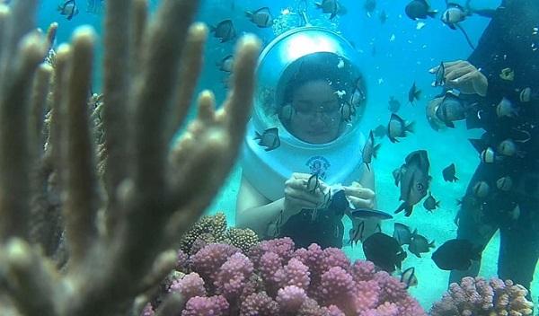 Vé máy bay đi Nha Trang - Cho cá ăn ngay dưới đáy biển