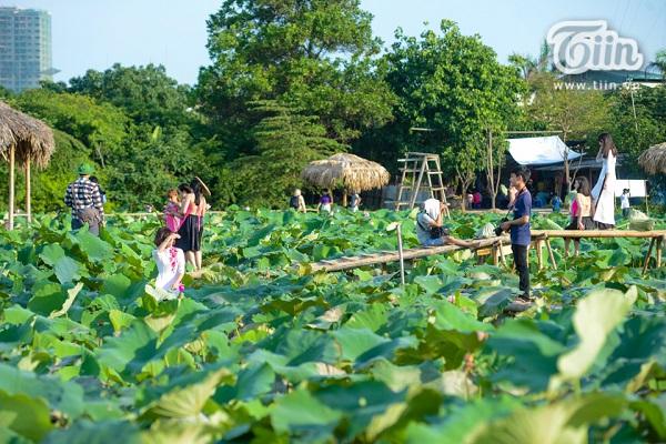 Vé máy bay đi Hà Nội - Đến đầm sen Hồ Tây vui chơi, chụp ảnh