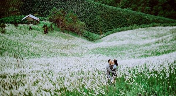 Vé máy bay đi Đà Lạt - Phong cảnh của thiên nhiên, núi rừng ở đồi cỏ tranh