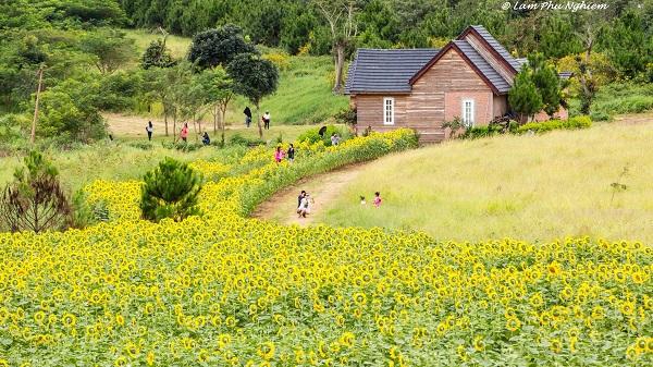 Vé máy bay đi Đà Lạt - Hấp dẫn những cánh đồng hoa rộng mênh mông ở Dalat Milk Farm