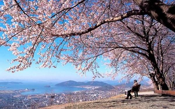 Thưởng thức vẻ đẹp lãng mạn mùa xuân ở Hàn Quốc