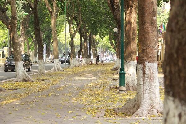 Chiêm ngưỡng vẻ đẹp của những hàng cây Hà Nội