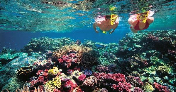 Vé máy bay đi Côn Đảo - Trải nghiệm lặn biển ngắm san hô ở Côn Đảo