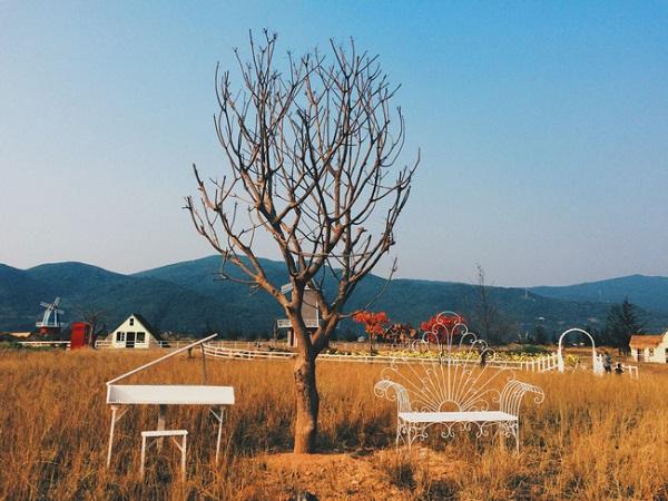 Vé máy bay đi Đà Nẵng - Check in tuyệt đẹp ở Thuận Phước Field