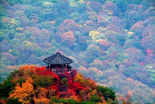 Tan chảy với những điểm đến đẹp như mơ ở Hàn Quốc