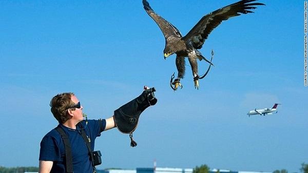 Chim ưng- Nhân viên điều khiển không lưu