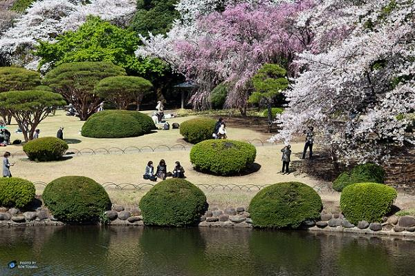 Khai phá những điểm đến hấp dẫn tại Tokyo