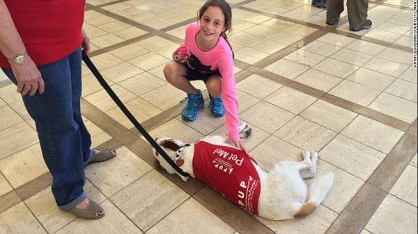 Chó- nhân viên trị liệu