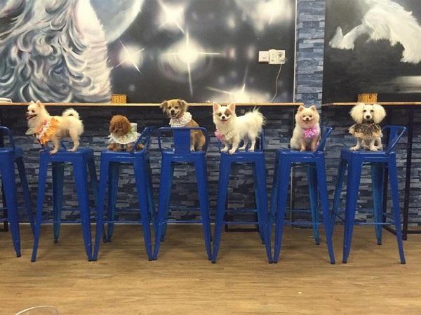 'Mê mẫn' với 2 quán café thú cưng tại Đà Nẵng