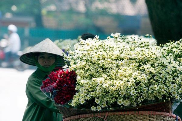 Vé máy bay đi Hà Nội - Chìm đắm trong vườn cúc mi mênh mông