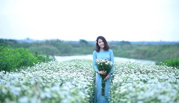 Cùng vé máy bay đi Hà Nội Check-in với hoa cúc họa mi Hà Nội