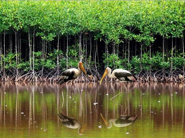 Vé máy bay đi Côn Đảo - Khám phá vườn quốc gia Côn Đảo
