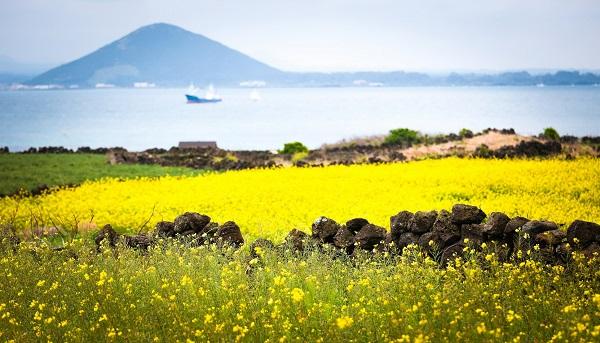 Đảo Jeju (Hàn Quốc)