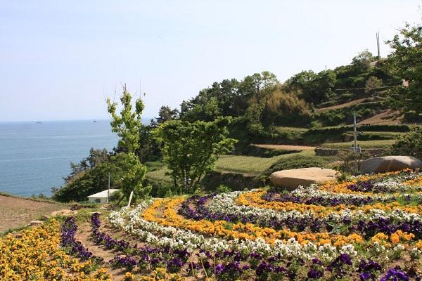 Cùng vé máy bay đi Hàn Quốc khám phá Darangee Village