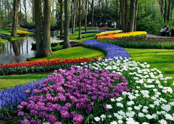 """Cùng vé máy bay đi Hà Lan thăm """"Khu vườn của châu Âu"""""""