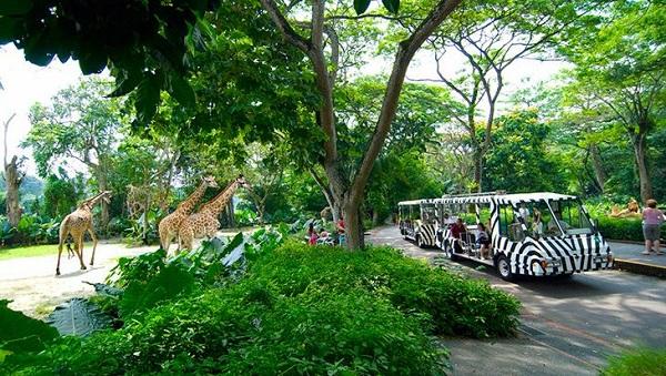 Vé máy bay đi Singapore - Sở thú Singapore