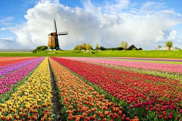 Vé máy bay đi Hà Lan - Thành phố Haarlem