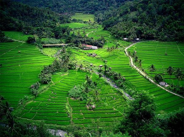 Vé máy bay đi Indonesia - Làng Bukit Lawang thanh bình