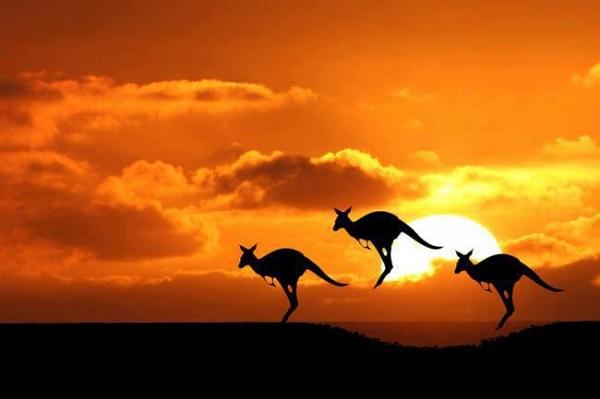 Cùng vé máy bay Vietnam Airliens khám phá vẻ đẹp hiền hòa nước Úc