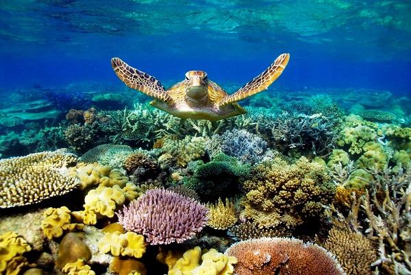 Chiêm ngưỡng vẻ đẹp của Great Barrier Reef