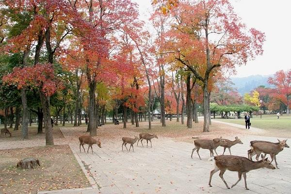 Vé máy bay đi Nhật Bản - Hòa mình vào thiên nhiên ở Nara