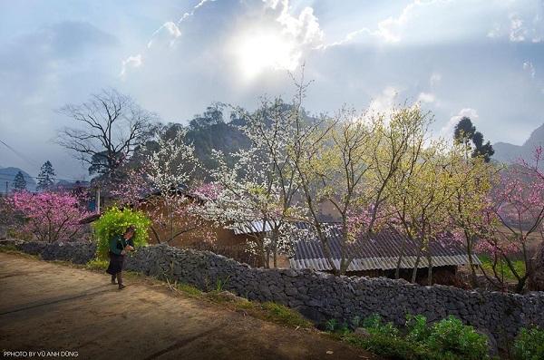 """Lập """"kèo"""" tháng 3 lên Hà Giang ngắm trời hoa nở muộn"""