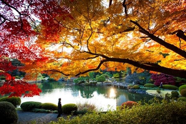 Đặt vé máy bay đi Tokyo khám phá Vườn quốc gia Shinjuku Gyoen