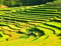 Vé Máy Bay Nha Trang - Thanh Hóa